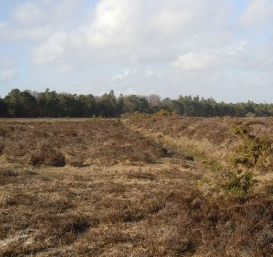 Cerdic's bridgehead on the 'bloody heath'