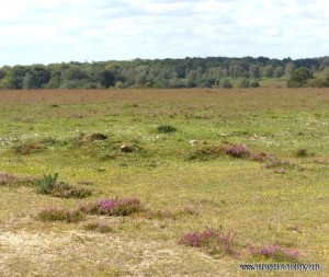 View of New Forest