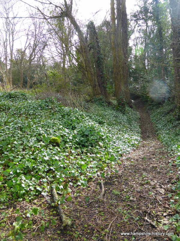 Tree filled moat of Ashley Castle