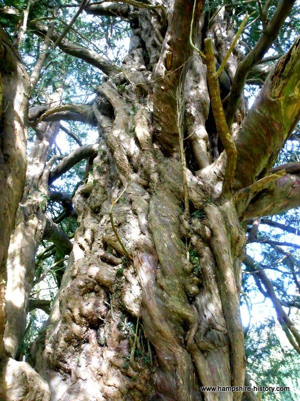 Old Yew Tree Newton Valance