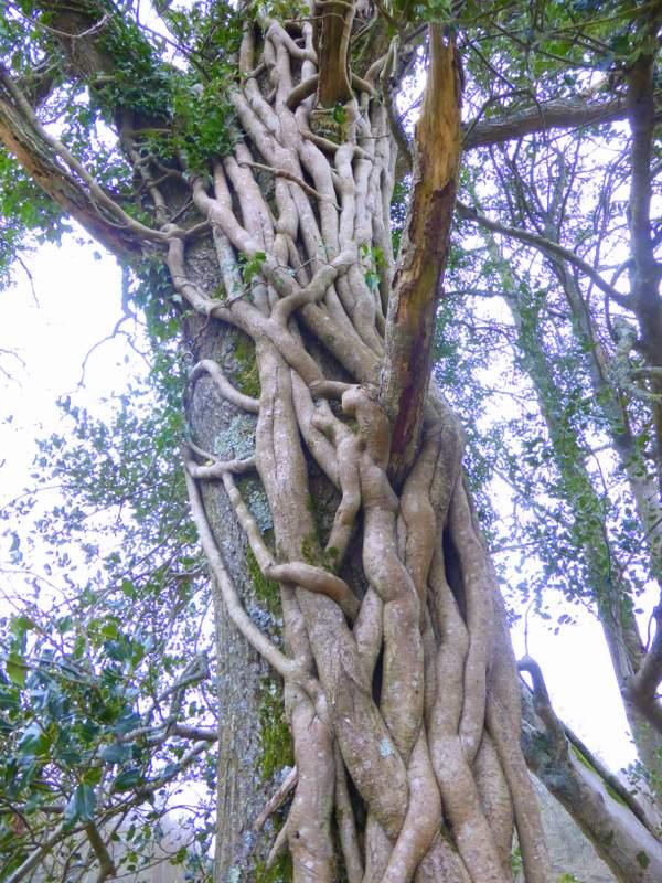 Woolmer Forest
