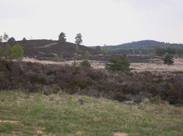 Royal Forest of Woolmer